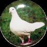 Logoprint chovatelství - holub 2