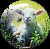 Logoprint chovatelství - ovce