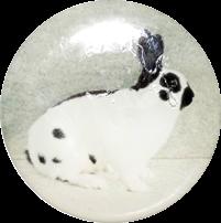 Logoprint chovatelství - králík