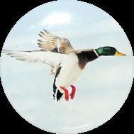 Logoprint myslivectví - kachna